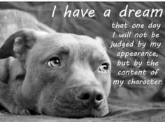 Quote From A Dog Fighter Brownies Friends